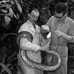 Python wrangler